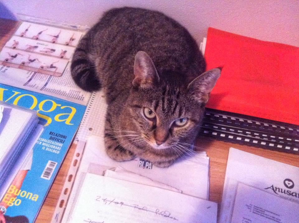 L'assistente di studio, Greta